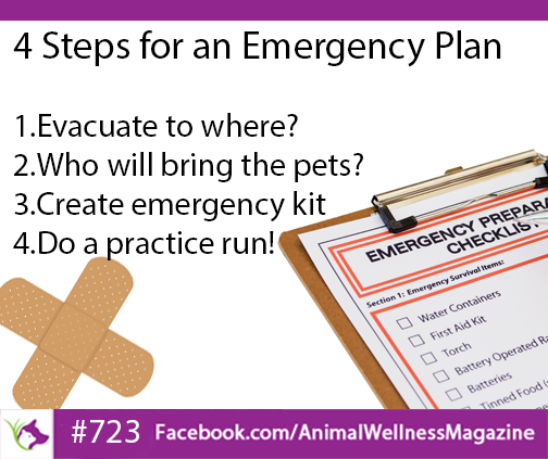 4 Steps for an Emergency Plan for your pets.  Click to read the article at Animal Wellness Magazine...